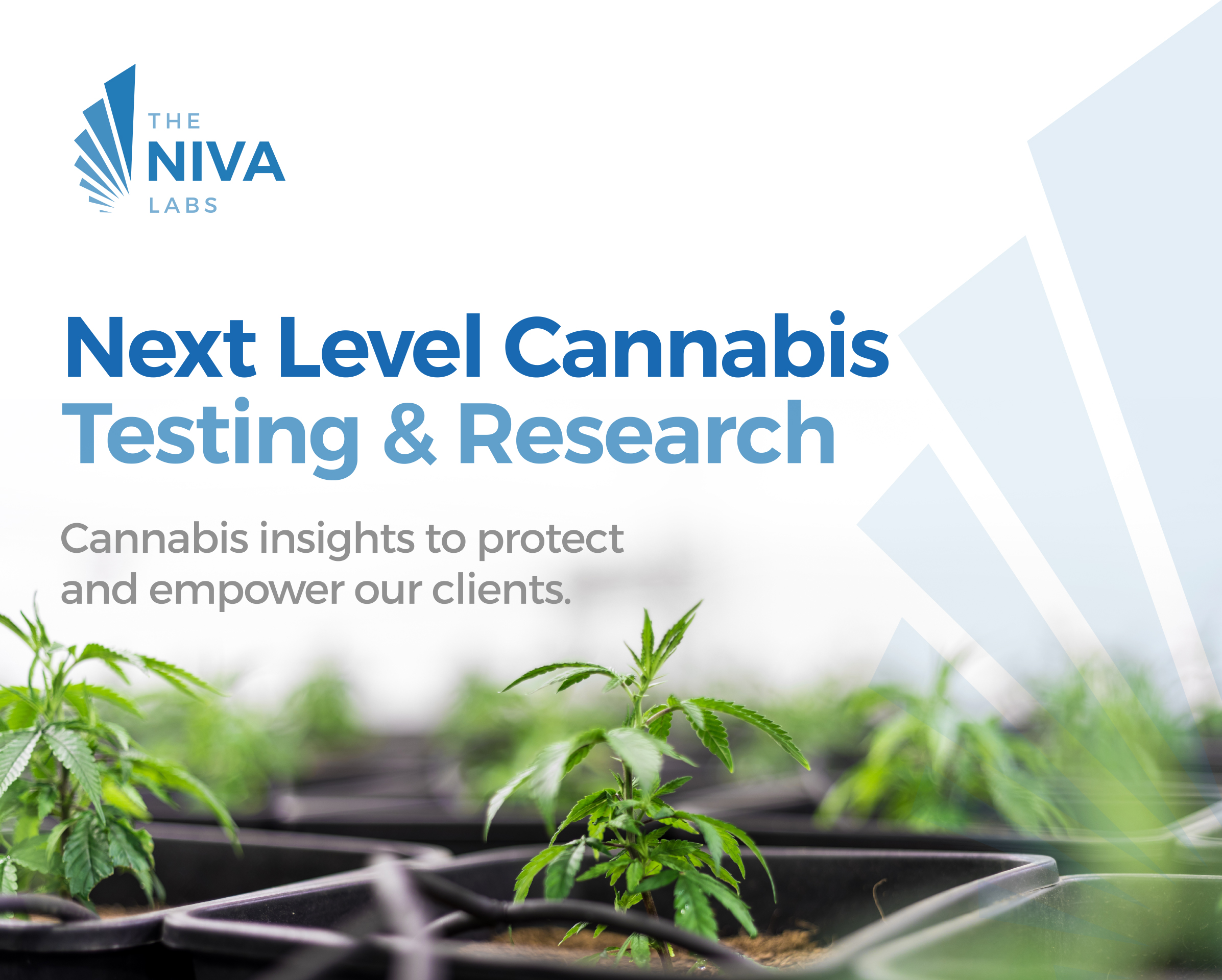 Cannabis plant background with The Niva Labs logo: Next Level Cannabis Testing and Research. Cannabis insights to protect and empower our clients.